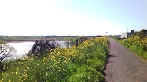こ、この黄色い花は?!