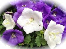 紫と白と蟻