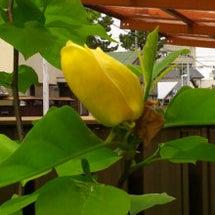 4月末あたりのお花の…