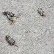 モグラの突然死と地震…