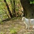 ◆散歩猫もっちーの視…