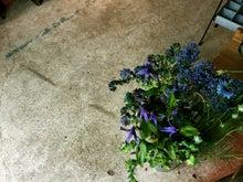 36青い花