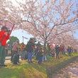 桜の撮影をしてきまし…