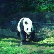 上野動物園(≧∇≦)…