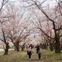 ♪桜再び♪