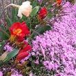 綺麗に咲いた春のお庭…