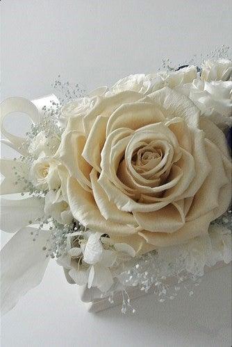 アモローサ・リンダ オフホワイト