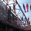 鯉のぼり(東京・茨城…
