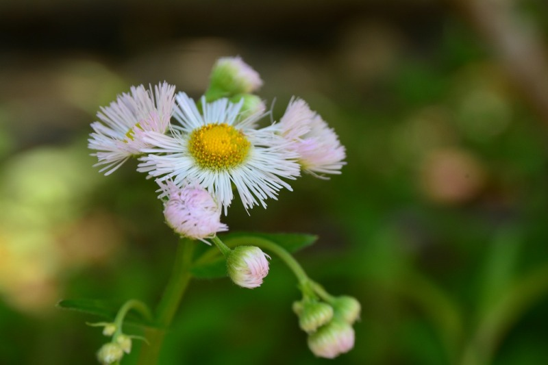 春紫苑(はるじおん)
