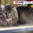 熊本地震:被災動物支…