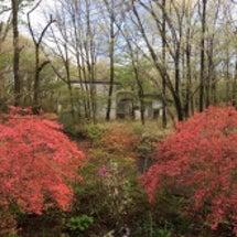 5月上旬 那須の庭の…