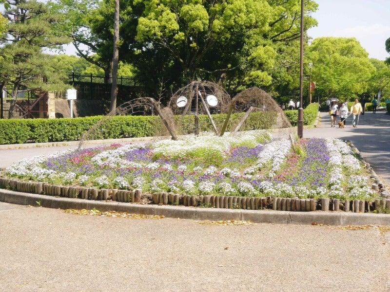 タコの花壇