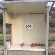 激安イチゴ 無人販売