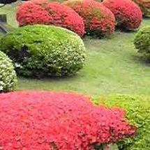 5月の塩竈神社