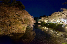 弘前城ライトアップ#15