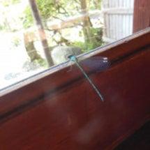 玉虫色蜻蛉