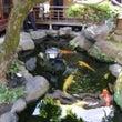 料亭の和風鑑賞池改修…