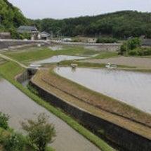 綾川町・田植えの風景