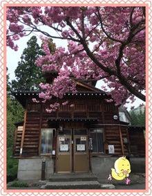 滝の湯と桜