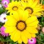 お花で笑顔満開!
