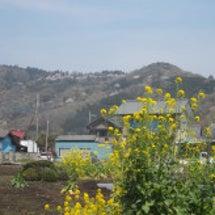 諸見湯山(その183…
