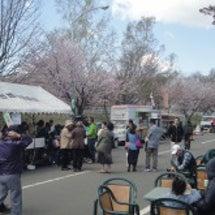 泉沢向陽台でお花見大…