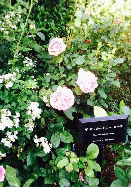外交官の家薔薇