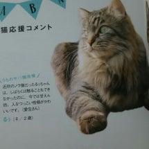 猫ぐらし!
