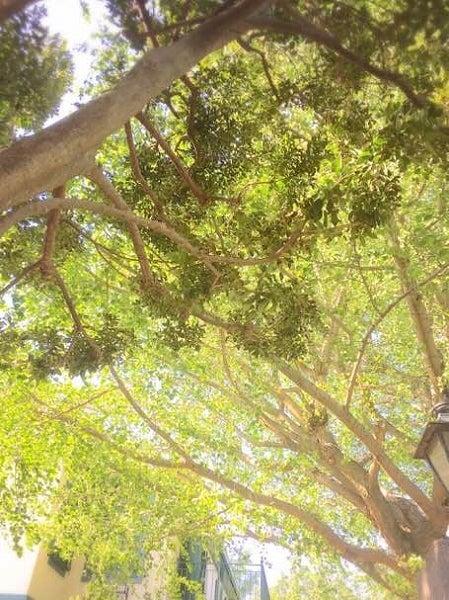 ブラフ18番館木