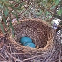 青色の卵!!何それ?