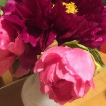 木香薔薇とゴージャス…