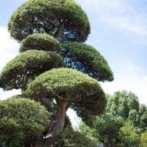 日本庭園好きのお客様…