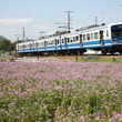 蓮華畑と伊豆箱根鉄道