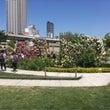 都会の中のバラ公園