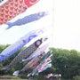 鯉のぼり@湯の郷