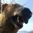 ある日野生の熊に出会…