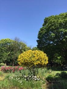 代々木公園7