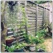 移植した植物たち