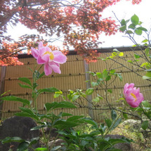 お庭まわりの工事が進…