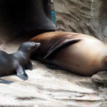 東山動植物園に行って…
