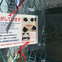 パンダを探しています