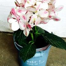 お花が入荷〜
