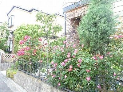 バラ屋敷5