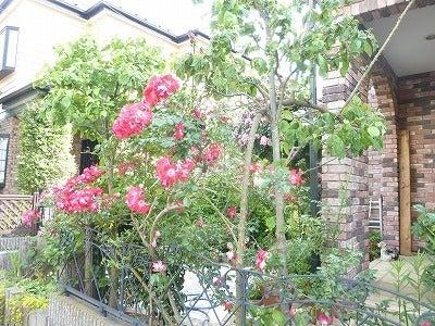 バラ屋敷4