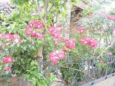 バラ屋敷2