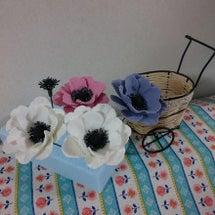 アネモネの花!