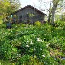 自然風な園芸店