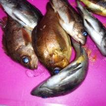 ♪魚・さかな・さかな…