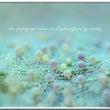 柏島の春の海藻