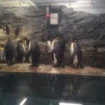 ペンギンまつり